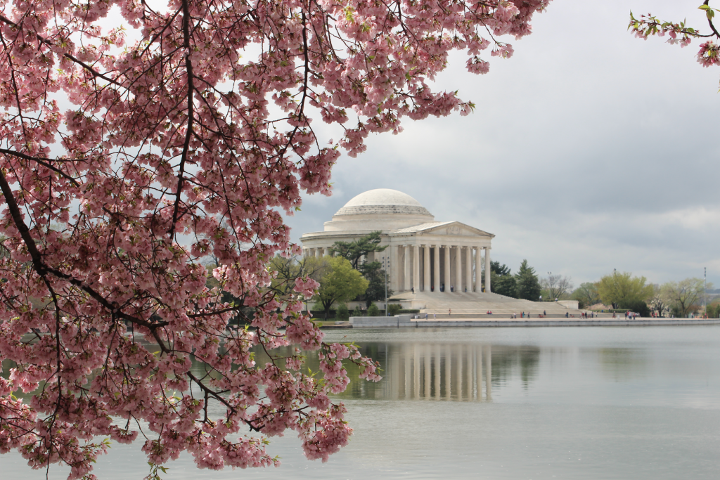 Washington DC is a great place to travel in the spring, in part due to the cherry blossoms